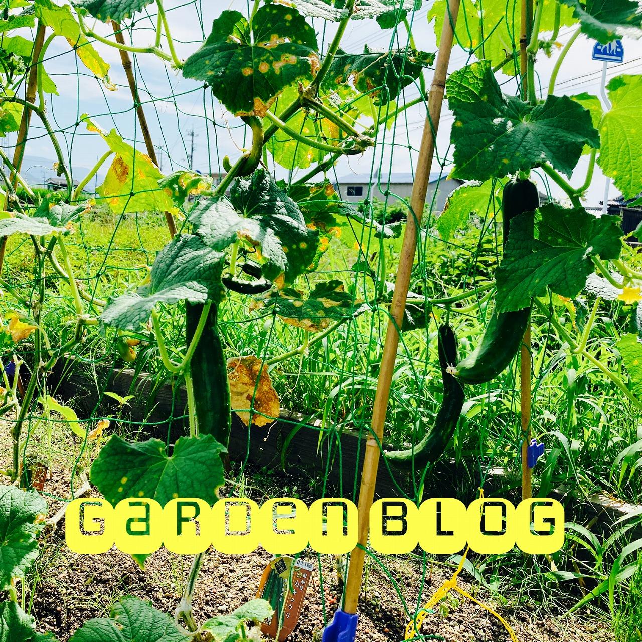 夏★野菜栽培を始めよう~